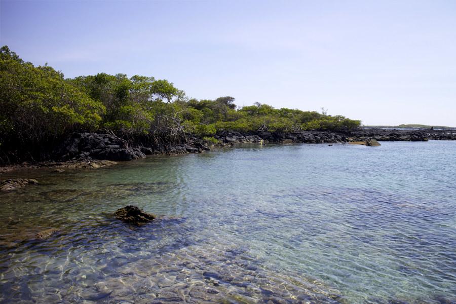 Concha Perla - Isabela Island