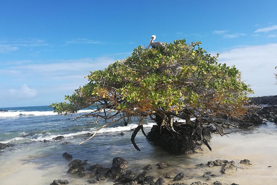 Humedales - Isabela Island