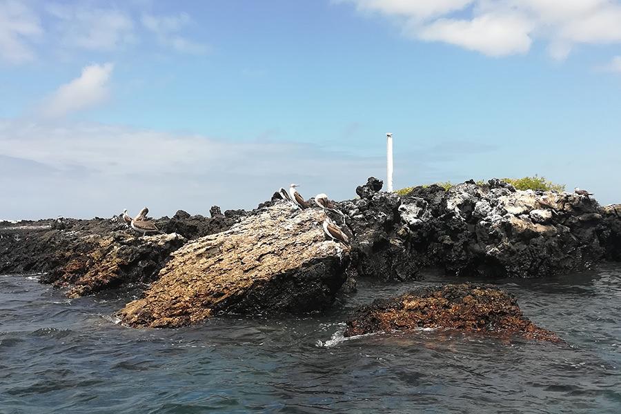 Tintoreras Islet - Isabela Island