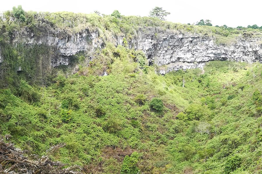 Twins - Isabela Island